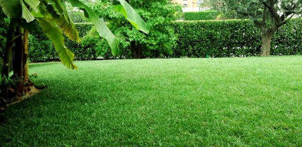 Giardiniere a bergamo progettazione e manutenzione giardini for Tappeto erboso prezzi